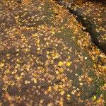 道は色づいた落葉に埋もれています。