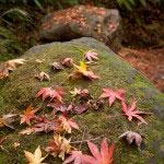 自然の美しさ。通常こういうカットはきれいな葉だけを見せるように手を入れるものですが、これは何も触っていません。