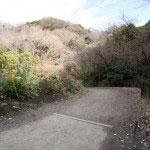 永福寺跡を過ぎてすぐ左に曲り、あとは右手、右手と進むとこのような土の道になります。