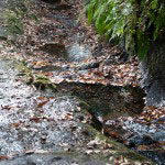 落葉と湧き水。紅葉以外にも楽しめます。