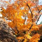 鮮やかな橙色。冬、目が覚めて最初の暖かいお茶のようです。