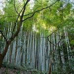 参道から見える竹林。かなり見事です。