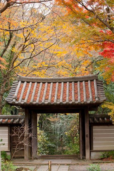 瑞泉寺の紅葉。参道を登って、山門付近。最も紅葉しています。