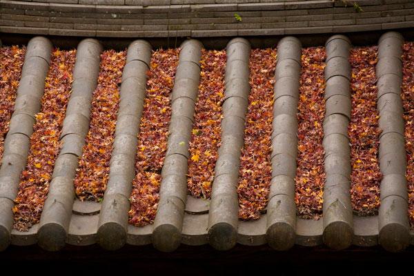 屋根に敷き詰められた落葉。