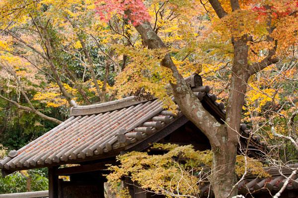 瑞泉寺の紅葉。