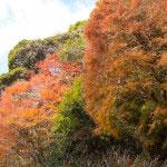 周囲の山も色づいています。