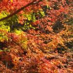 参道から少し外れたところにも鮮やかな紅葉がありました。