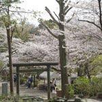 周囲には源氏山公園や葛原岡神社など見所があります。
