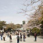 季節には桜のごしの大仏様も拝めます。