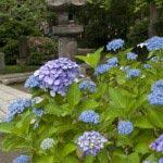 6月18日、まだこれから大きくなる花もあります。