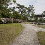 稲村ケ崎海浜公園のあじさい。たくさん植えられているのは展望台のところです。