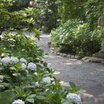 鎌倉宮のあじさい。随所に配置された灯籠などがあじさいの美しさを盛り上げます。