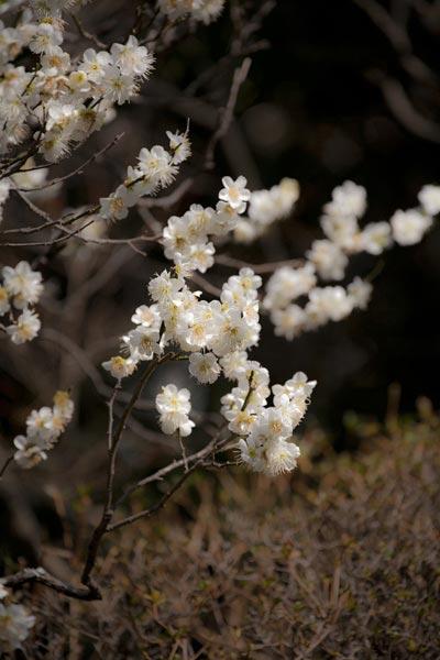 報国寺。竹の庭がとても有名な報国寺は、梅や紅葉の名所でもあります。