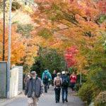 人で賑わう参道。紅葉が迎えてくれます。