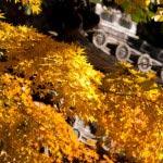 北条時頼墓所付近の紅葉。ファインダーの中が豊かになる気がします。