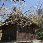 浄光明寺の縁側で静かに梅を楽しむのは至福の時です。
