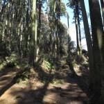 天園ハイキングコース瑞泉寺〜獅子舞上合流地点間。再び急な登りです。