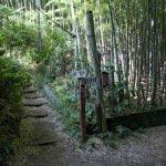 〔地図⑨〕獅子舞を登りきったところから建長寺方面に少し歩くと、道は二手にわかれます。右は金沢八景方面。横浜自然観察の森にいくことができます。