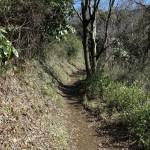 天園ハイキングコース瑞泉寺〜獅子舞上合流地点間。天園、明王院分岐をすぎたところ。