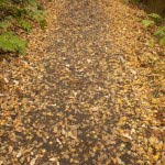 〔地図⑥〕秋には紅葉が地を覆います。