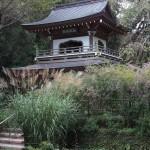 北鎌倉、浄智寺の萩とススキ。