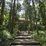 杉木立の奥に拝殿が見えてきます。