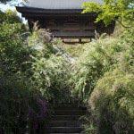 海蔵寺の萩(ハギ)。参道が隠れるほどの萩です。