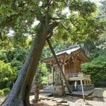 熊野神社のスジダイ。本殿の前にあります。