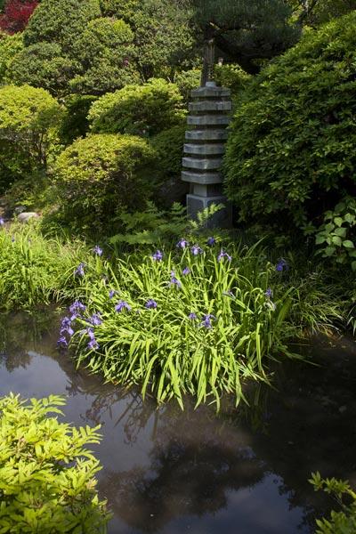 光触寺の杜若(カキツバタ)。静けさがグンと増す十二所にある光触寺。水を好む杜若が池に咲きます。