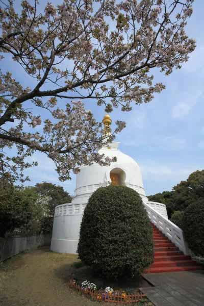 龍口寺の仏舎利塔と桜。