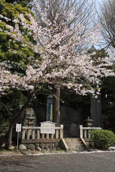 ここにも、霊を弔うように桜が咲きます。