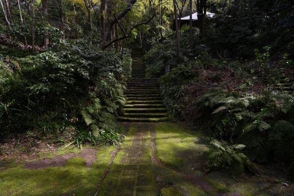 妙法寺、苔の石段。