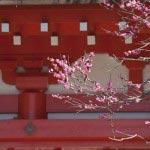 荏柄天神社の梅。本殿の朱と紅梅。