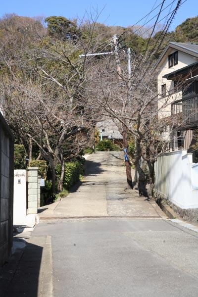 薬王寺門前。桜が植えられています。