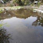 日蓮が干ばつを救った日蓮雨乞いの池、田辺ヶ淵。