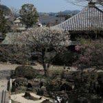 長谷寺の梅。もっとも多くの梅が植えられた池のあたりを上から見ます。