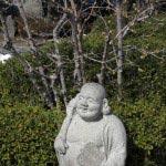 長谷寺の梅。階段を登りきると、右側足元に蝋梅が咲いています。蝋梅は開花が早いので、紅梅や白梅が見頃を迎えた頃には枯れ始めています。