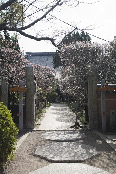 鎌倉の七福神めぐり。毘沙門天がある宝戒寺。門前後の参道は手前が桜、奥が梅の並木になっています。秋は参道が萩に覆われます。