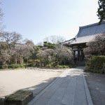 鎌倉の七福神めぐり。毘沙門天がある宝戒寺は、萩と梅が有名です。境内には数十本も植えられ、特に本堂前の枝垂梅は鎌倉随一。