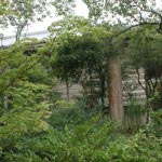 源実朝歌碑。関東大震災において倒壊したニノ鳥居の一部を利用しており、かなりの大きさです。
