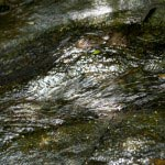 朝比奈切通し。朝比奈切通しの魅力の一つは水。滑川の水源地でもある朝比奈は鎌倉側に清々しい水が流れています。