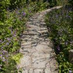 瑞泉寺の諸葛菜(ショカッサイ)。梅林を覆うように咲いています。