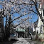 小町大路沿いに佇む妙隆寺。参道の両側に桜が植えられています。