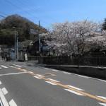 花の橋の桜。鎌倉駅から金沢街道を歩いていけば見落とすことはありません。バスの場合、下りの停留所は花の橋を少し過ぎたところにあります。上りのバス停は花の橋の隣です。