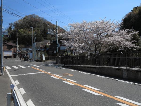 華の橋の桜。鎌倉駅から金沢街道を歩いていけば見落とすことはありません。バスの場合、下りの停留所は花の橋を少し過ぎたところにあります。上りのバス停は花の橋の隣です。