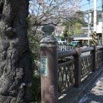 花の橋の桜。立派な幹と橋。