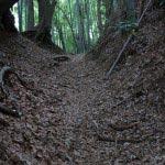 最初は竹林です。このあたりは道もよく歩きやすいです。