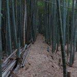 もうしばらく竹林です。竹の青さに癒やされます。