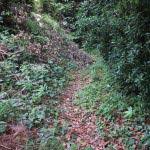 高祖坂から高祖井戸入口を入ると、草木が茂る細い道に入ります。井戸までは50mほどです。