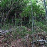 竹林が終わりそろそろ登り始めます。